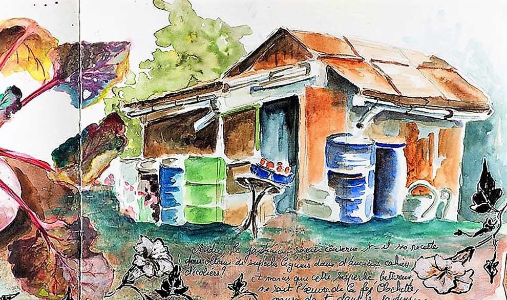 Récupérateurs d'eau de pluie dans un jardin ouvrier