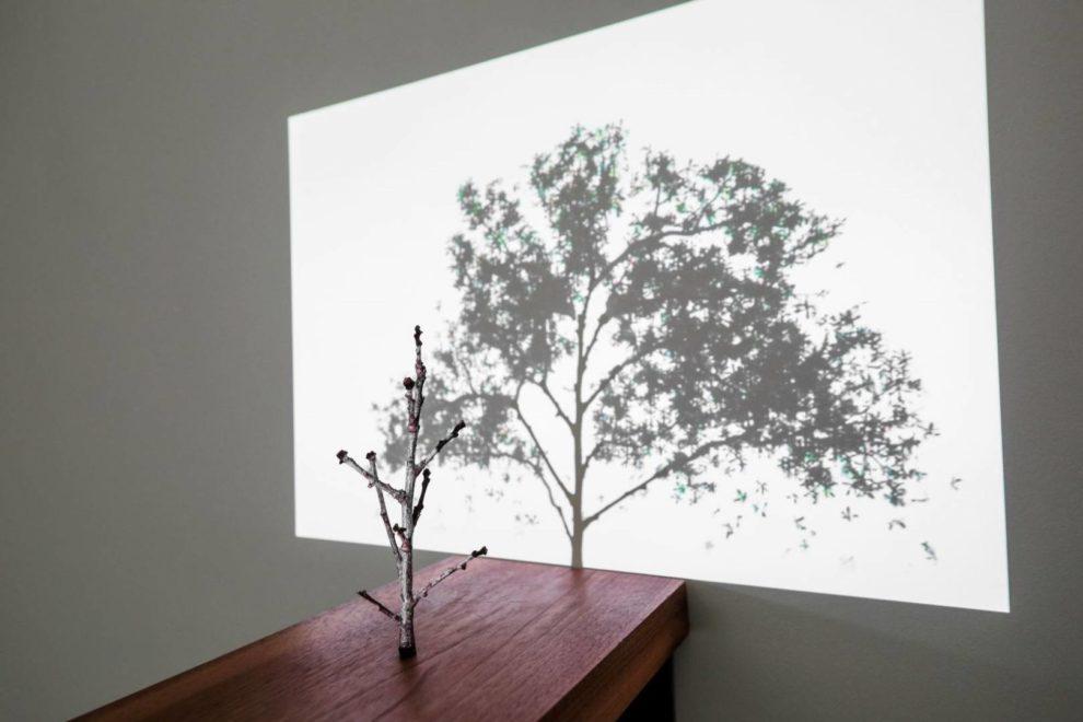 The tee and its shadow de Samuel Rousseau à la Galerie Gastaud.