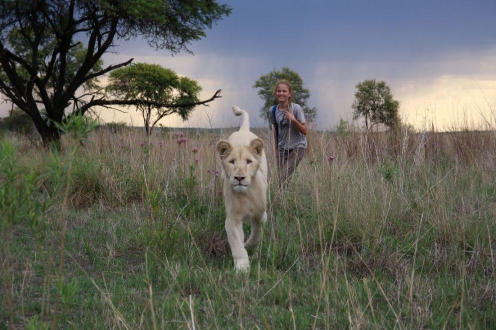 """le film """"Mia et le lion blanc"""" de Gilles De Maistre."""