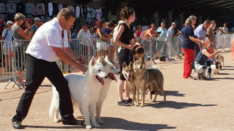 Expo canine Châtel-Guyon / Photo DR