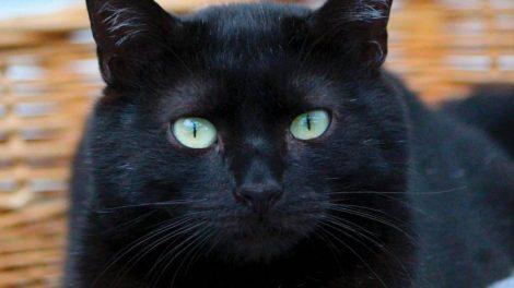 chat noir / photo APA63