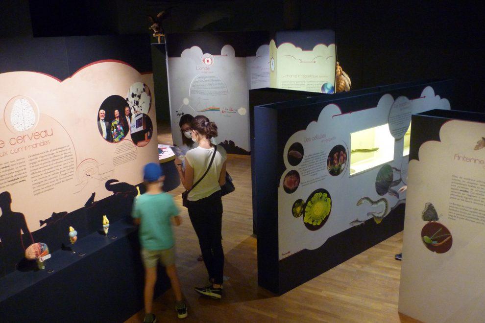 Photo : Emma D'Aversa / musée Lecoq